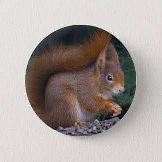 Nut Brunch Badge Pinback Button