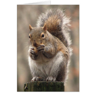 Nut Crazy Squirrel Greeting Card