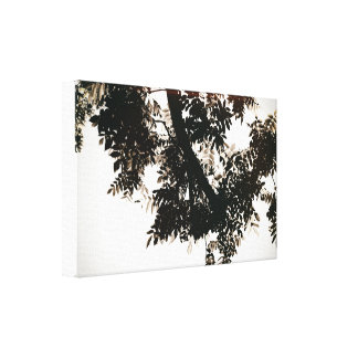 Nut tree sheets canvas print