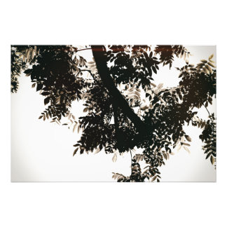 Nut tree sheets photo print