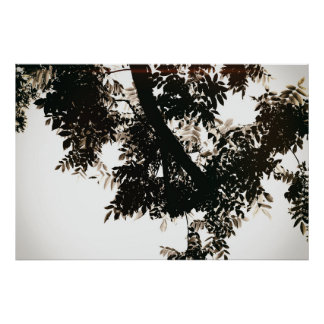 Nut tree sheets poster