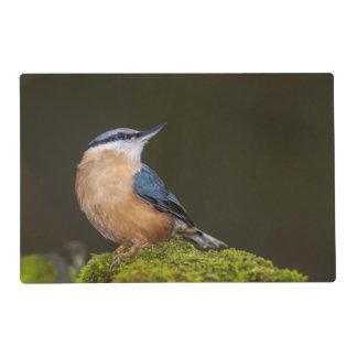 Nutchatch Wild Bird Placemat Laminated Placemat