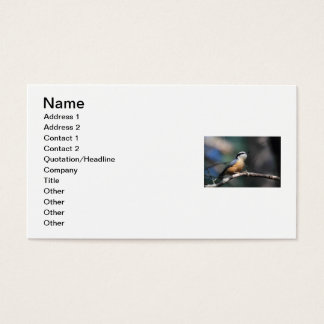 Nuthatch Business Card
