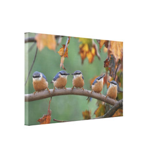 Nuthatch Collage Canvas Print