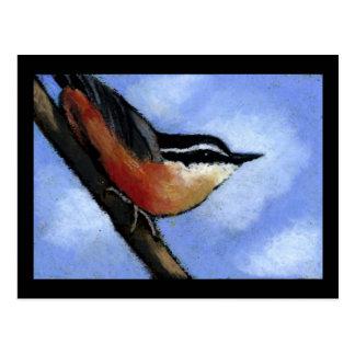 NUTHATCH IN OIL PASTEL: ART: BIRD POSTCARD
