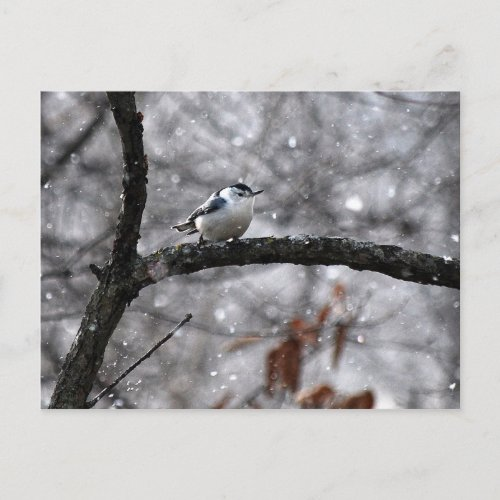 Nuthatch in the Snow Postcard postcard