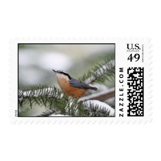Nuthatch on Snowy Branch in Winter Postage Stamp