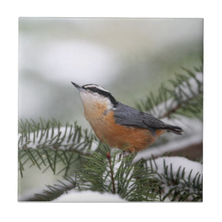 Nuthatch on Snowy Branch in Winter Tiles