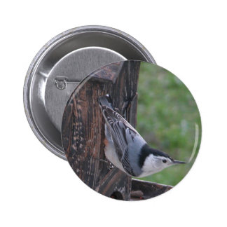 Nuthatch Pinback Button
