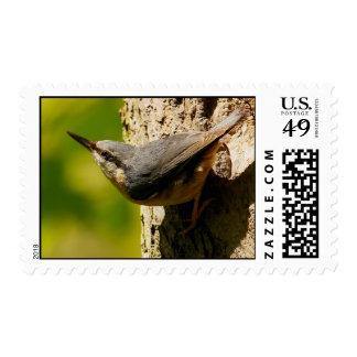 Nuthatch Postage