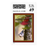 Nuthatch Postage Stamp