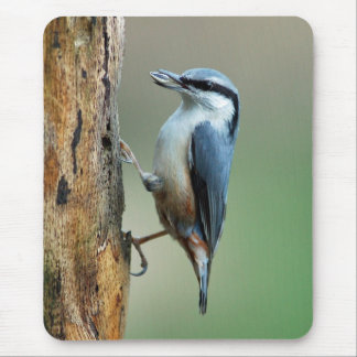 Nuthatch with sunflower seed mouse pad