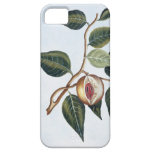 Nutmeg, plate 7, from 'Collection Precieuse et Enl iPhone 5 Covers