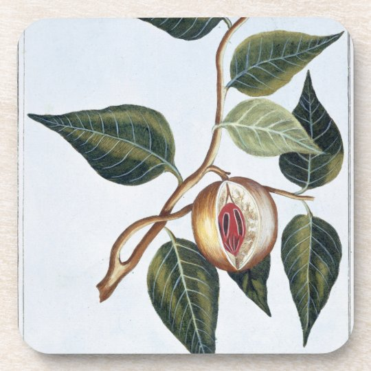 Nutmeg, plate 7, from 'Collection Precieuse et Enl Drink Coaster