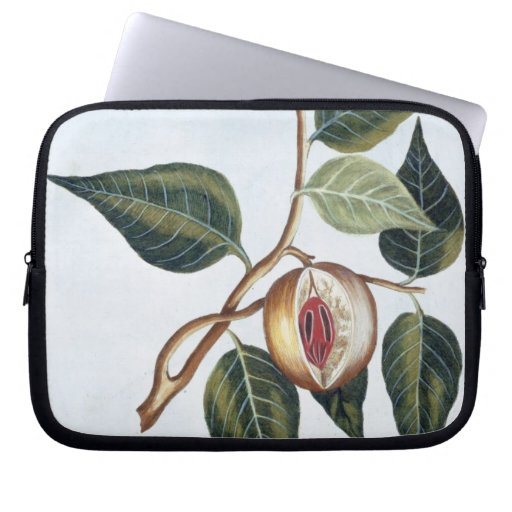 Nutmeg, plate 7, from 'Collection Precieuse et Enl Laptop Computer Sleeve