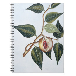 Nutmeg, plate 7, from 'Collection Precieuse et Enl Notebook