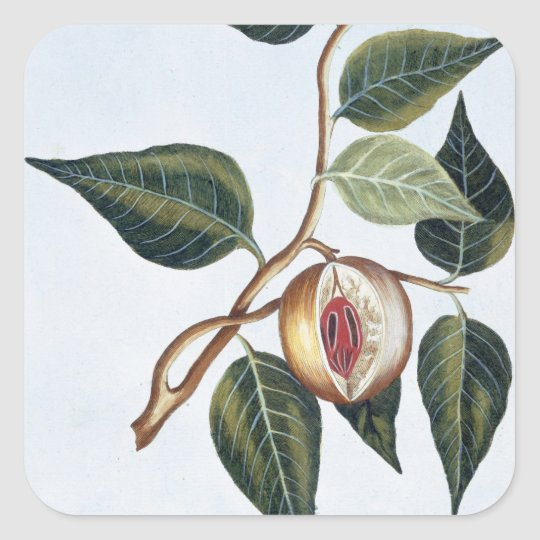 Nutmeg, plate 7, from 'Collection Precieuse et Enl Square Sticker