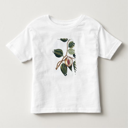 Nutmeg, plate 7, from 'Collection Precieuse et Enl Toddler T-shirt