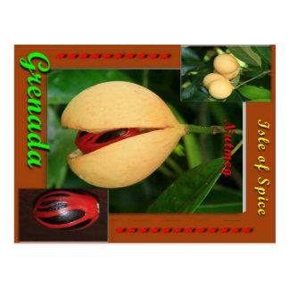 Nutmeg Postcard