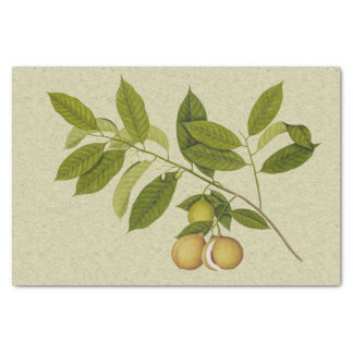 Nutmeg tree botanical print tissue paper
