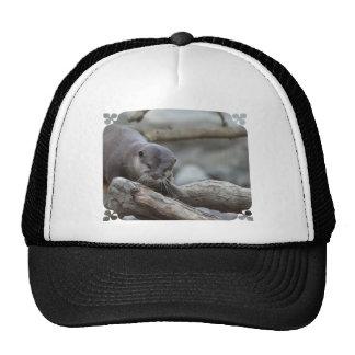 Nutria adorable gorra