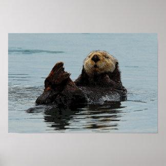 Nutria de mar de Alaska Poster