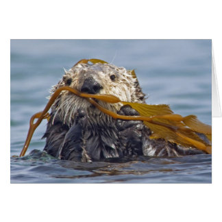 Nutria de mar de California envuelta en el quelpo Tarjeta De Felicitación