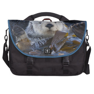 Nutria de mar envuelta en quelpo bolsa de ordenador