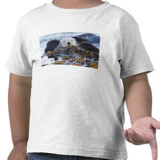Nutria de mar envuelta en quelpo camiseta