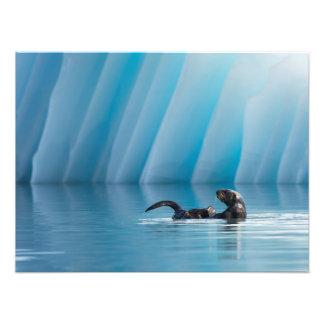 Nutria de mar juguetona impresión fotográfica