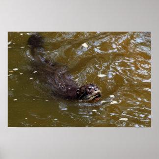 Nutria de río gigante brasiliensis de Pxeronura Posters