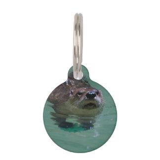 Nutria de río norteamericana placas de mascota