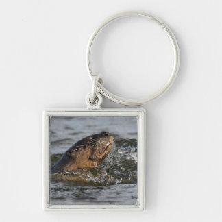 Nutria de río que come un pescado llavero personalizado