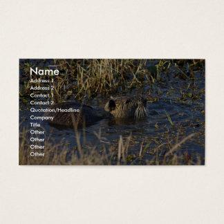 Nutria in water business card