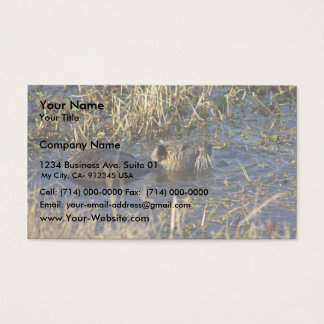 Nutria in water business card