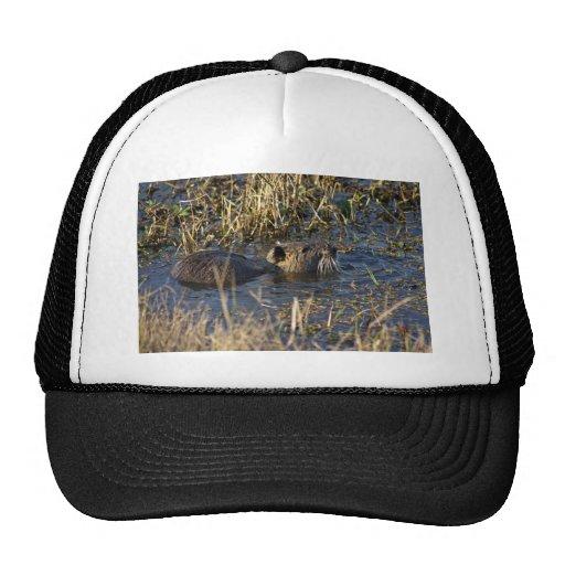 Nutria in water trucker hats