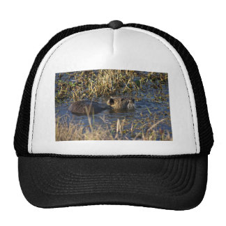 Nutria in water trucker hat