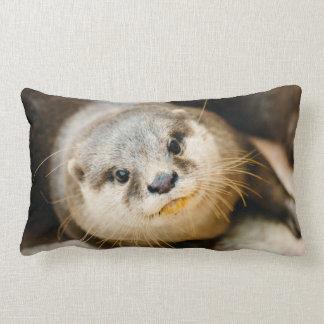 Nutria linda, retrato animal, fotografía de la almohadas