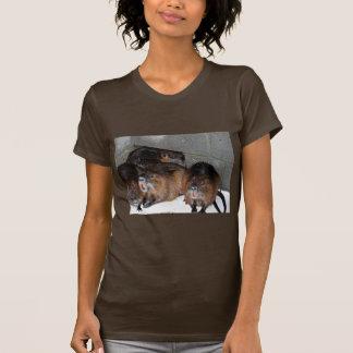 Nutria prisionero en la referencia nacional de la camiseta