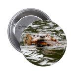 Nutria y pescados de río pin
