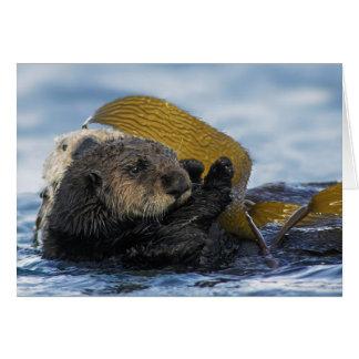Nutrias de mar de California Tarjeta De Felicitación
