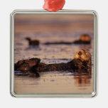 Nutrias de mar, lutris 3 del Enhydra Ornamento De Navidad