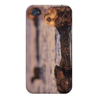 Nutrias de mar, lutris 3 del Enhydra iPhone 4/4S Fundas