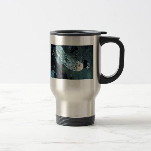 Nutrias de mar meridionales tazas de café