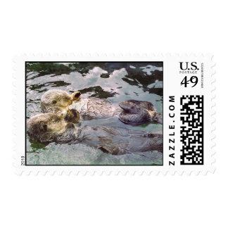 Nutrias de mar que llevan a cabo las manos sello postal