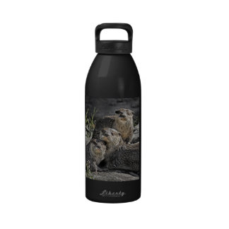 Nutrias tres en una línea botellas de agua reutilizables