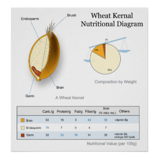 Nutritional Value Diagram of a Wheat Kernal Posters