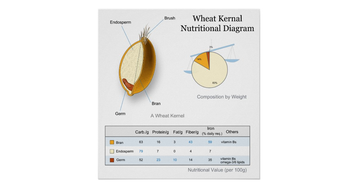 Nutritional Value Diagram Of A Wheat Kernal Poster