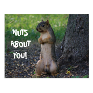 NUTS ABOUT YOU! POSTCARD