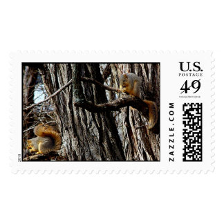 nuts for brunch postage stamp